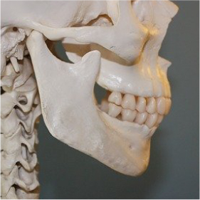 image-oro-maxillo-faciale-cabinet-kinesitherapie-toulouse